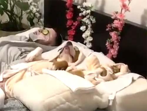 きゅうりを目に乗せて眠る犬と猫