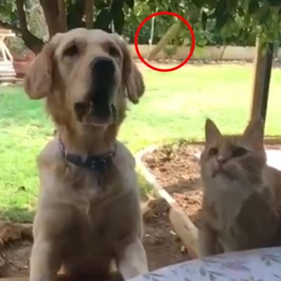 犬に噛まれるネコさん2