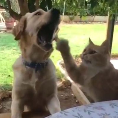 犬に噛まれるネコさん3