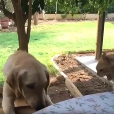 犬に噛まれるネコさん6